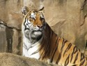 Ticket to Lowry Park Zoo in Tampa, FL for $26