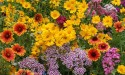 Pre-Seeded Mats w/ Flower Seeds 4-Pack for $20 + $4 s&h