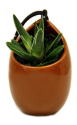 LiveTrends Design Live Plants at Amazon: Up to 46% off + free shipping w/ Prime