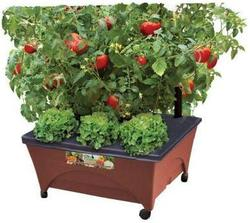 City Pickers Raised Garden Bed Kit for $20