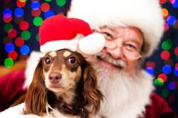 Pet Photo with Santa for free at PetSmart